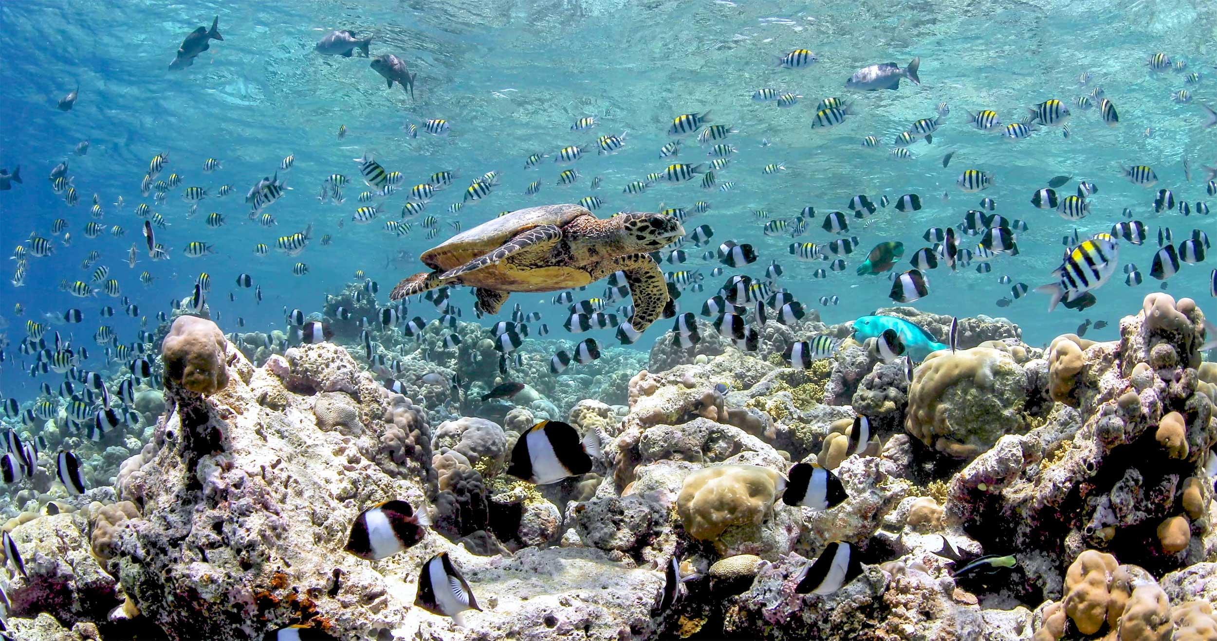Malediven: Anantara Dhigu